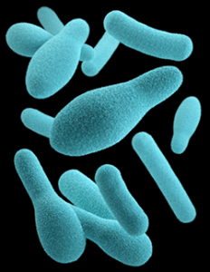 Bacterial Infections of the Bowel