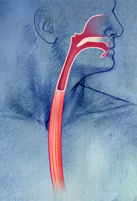 Esophageal Infections